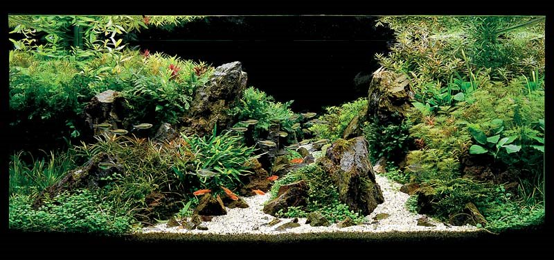 Aquascaping Blog : Aquatic Eden - Aquascaping Aquarium Blog