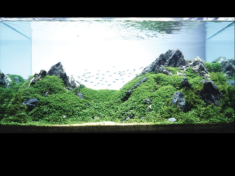 Top 3 Mistakes When Starting a Planted Aquarium