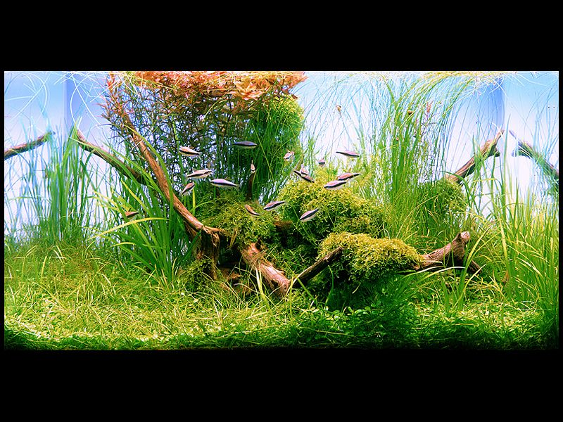 The Golden Rule Of Aquascaping