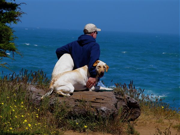 Image Result For Raising Canine Dog