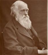 1878年的達爾文