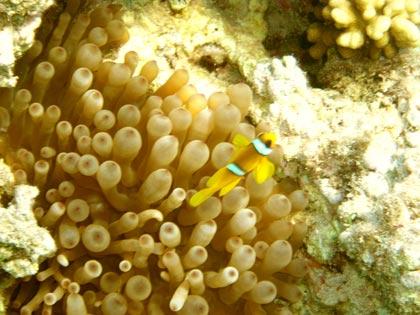 Ich habe Nemo gefunden und er ist gelb.