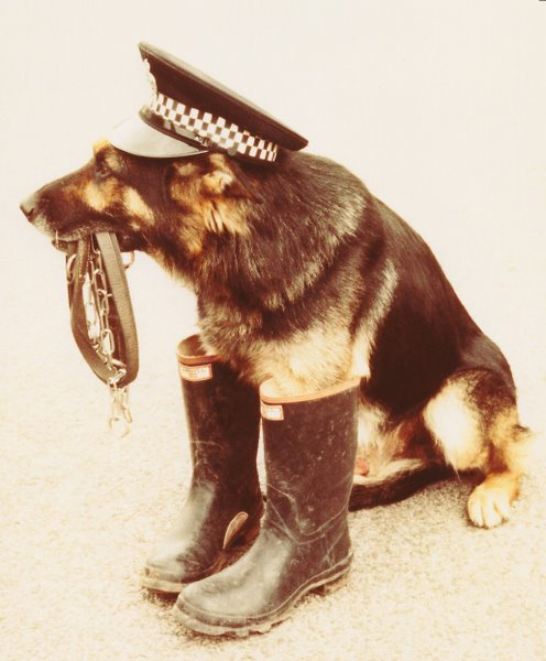 Police Dog Rudi