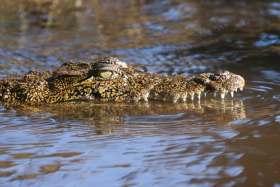 Mr Bruce Crocodile - a close friend of Steve Irwin