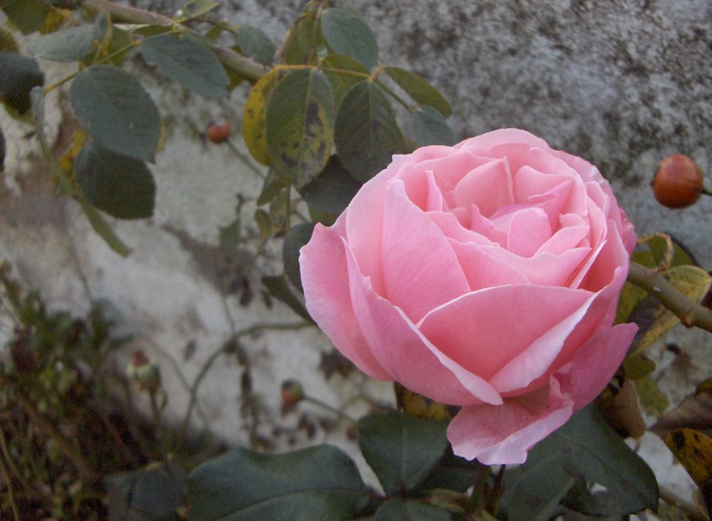 http://photos1.blogger.com/blogger2/6689/988370697981249/1600/HPIM2743.jpg