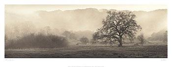 Meadow Oak Tree (Alan Blaustein)