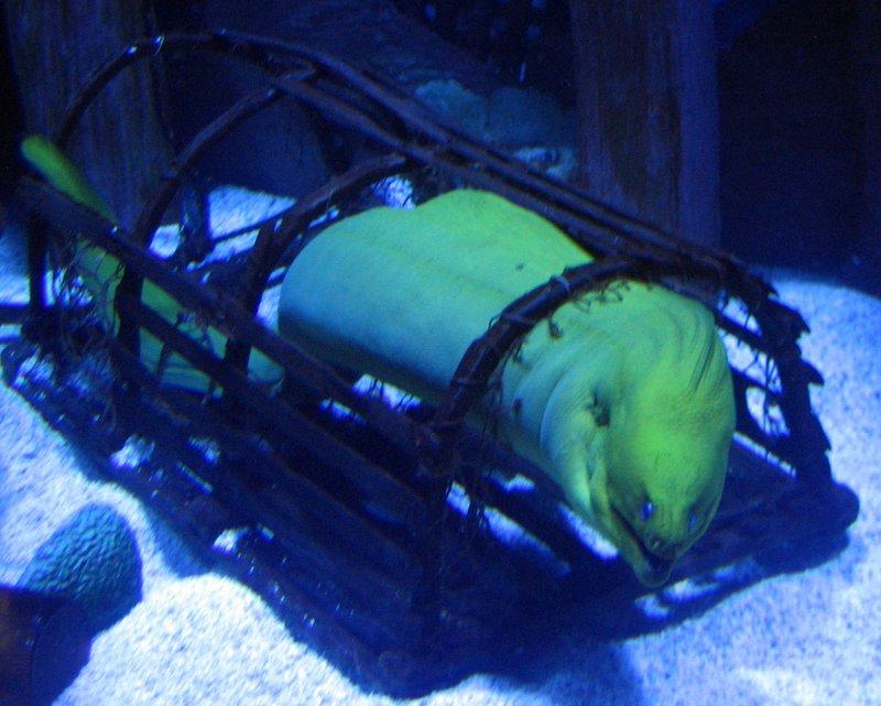 Aquarium Decorations Houston Aquarium Houstonreview Blog