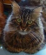 melek kızım sheba'm...08.06.1992-30.09.2009...