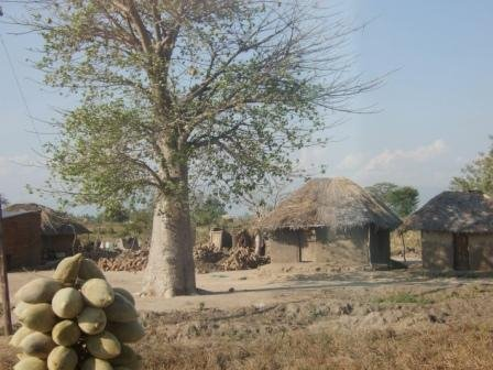 Common Village Scene South Central Malawi