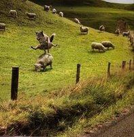 Nhảy cừu đúng nghĩa
