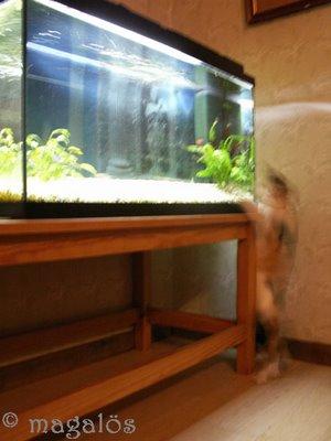 catfishing3