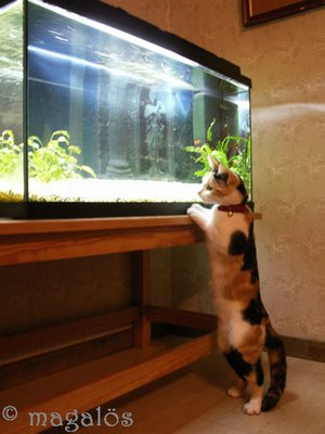 catfishing4