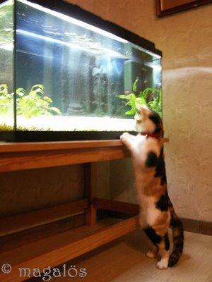 catfishing5