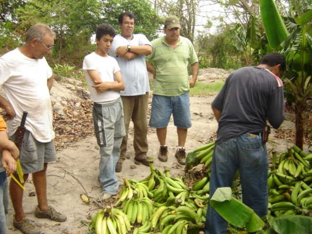 Men Observing a Pile of Platanos