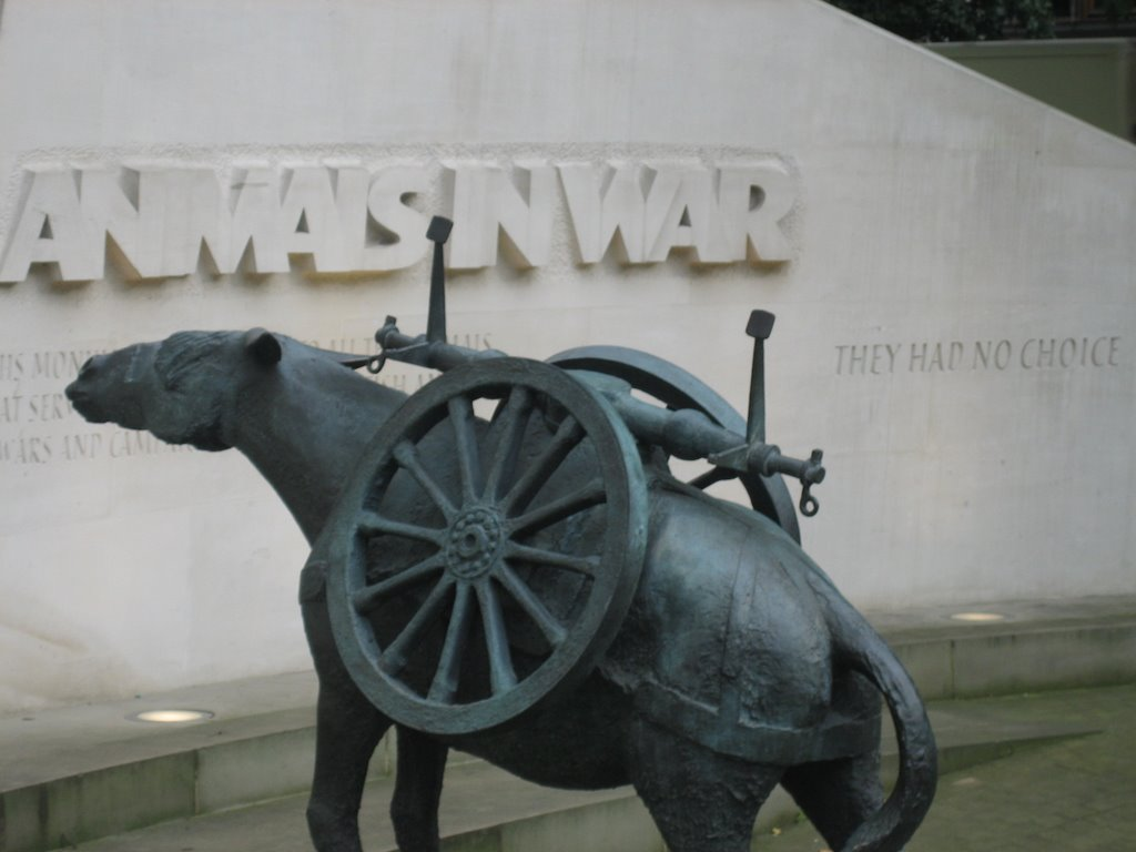 Write my report on the great war