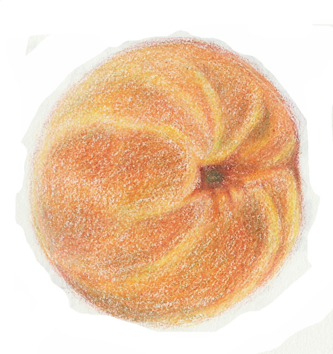 Contour Line Drawing Fruit : Images about drawing fruit and veg on pinterest