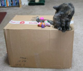Catzee's pile of toys.