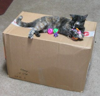 All toys claimed by Catzee!