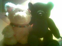 pocri&bear