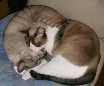 Mac & Tippy Curled Up Together