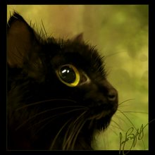 Gato eriçado
