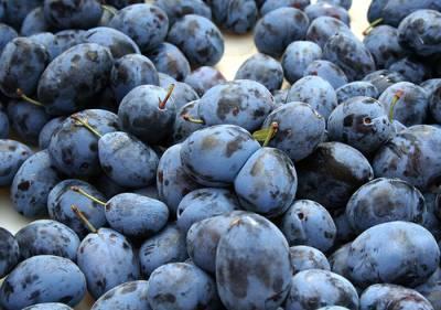 prune albastre / blue plums