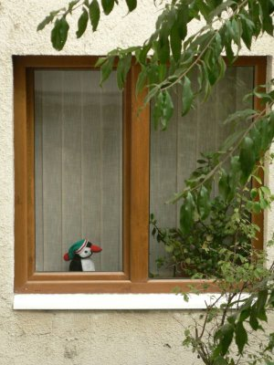 Pinguin la geam