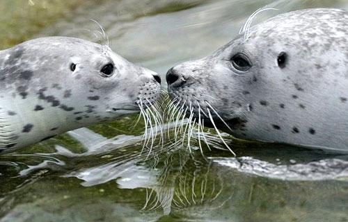 L'idillico rapporto madre-figlio fra le foche