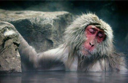 Macaco malinconico