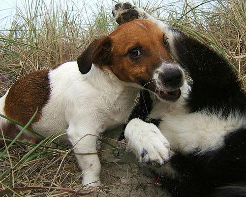 Cane cui giocare piace molto