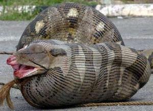 Big Ol' Snake