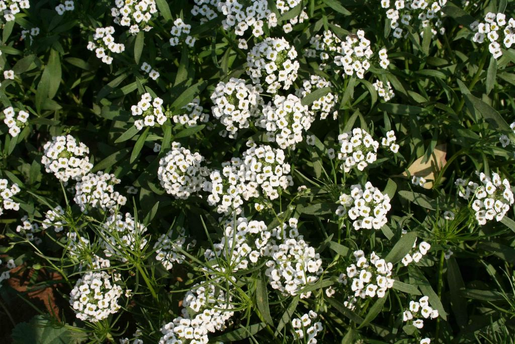 The flora and fauna of india and so the world white flowers hey what are the names of these now mightylinksfo