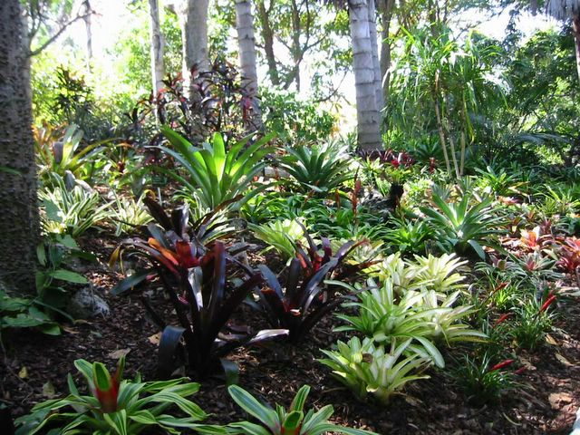 Tropical Garden Ideas Nz delighful tropical garden ideas nz wendelborn profaccredgdsnz the