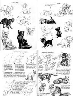 how to draw animals jack hamm pdf