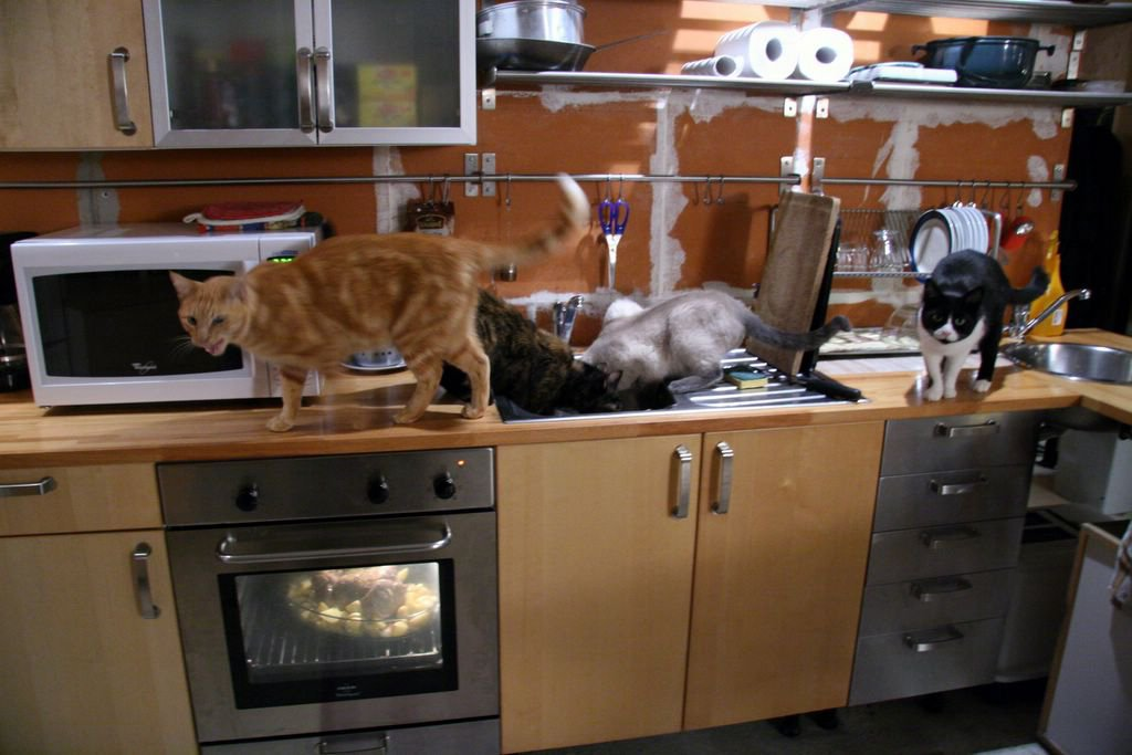 Becks Posh Cats In A French Kitchen