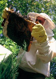 Μελισσοκόμος επί τω έργω