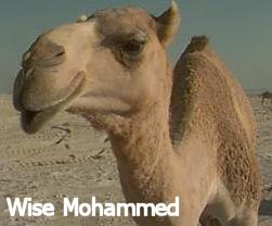 Wise Mohammed