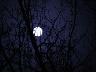 Full moon in tree