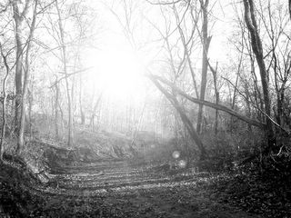 Brilliant forest sunshine
