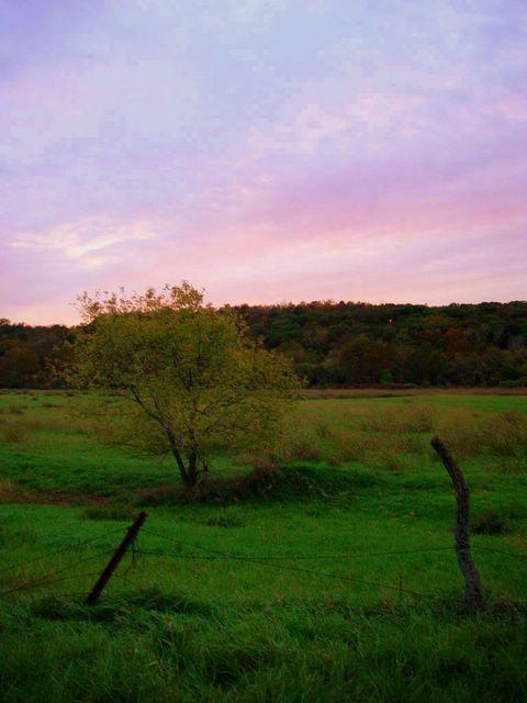 controversial topics in pilgrim at tinker creek