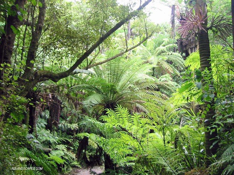 plants names telugu lo