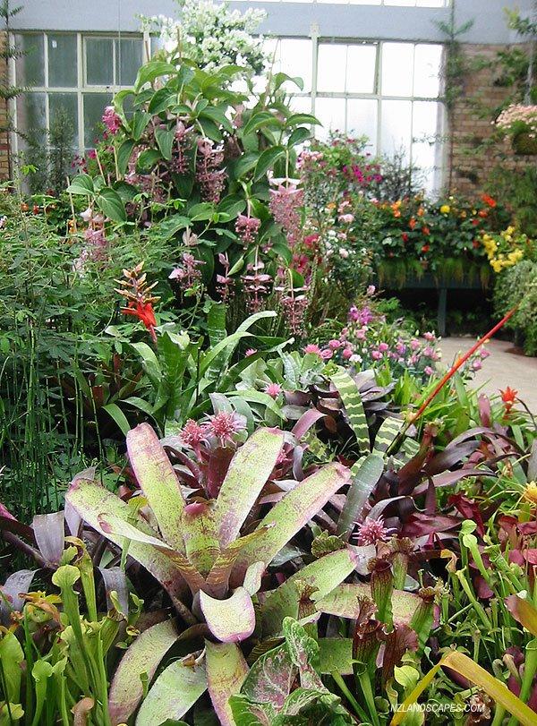 Evergreen Bromeliad Brightness Dominates Auckland Winter Garden Landscape.  NZLANDSCAPES. Landscape Designers.