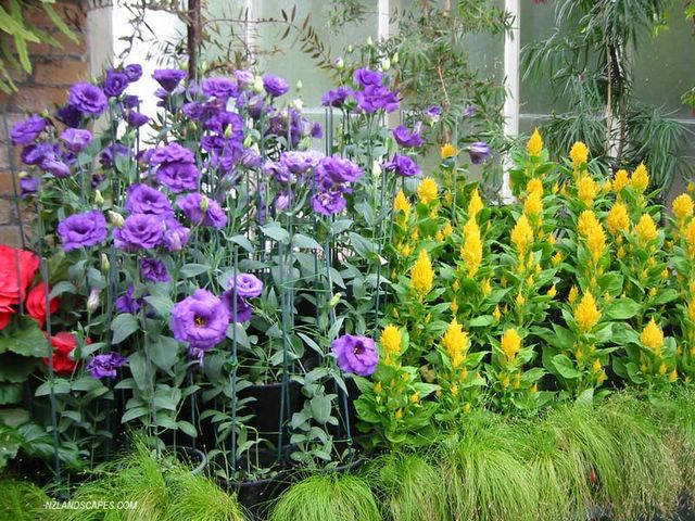 NZLANDSCAPES. Landscape Design Blog. New Zealand. NZ.: Garden ideas ...