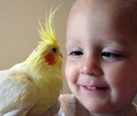 Boy Meets Bird