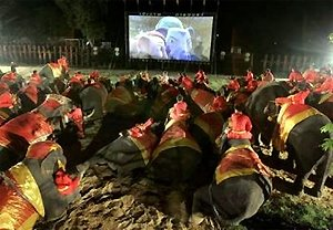 Elephants watch an outdoor movie near Bangkok.