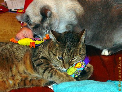 Photo: Kelp and Morty commune with their new catnip toys.