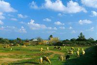 rebaño de ovejas en Formentera