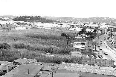 zona de ses Feixes des Prat de Vila, que serán adquiridas por el Gobierno (foto DI)