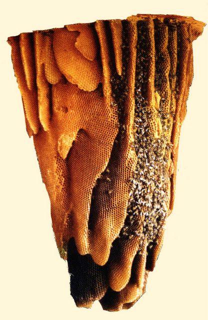 abejas en un panal