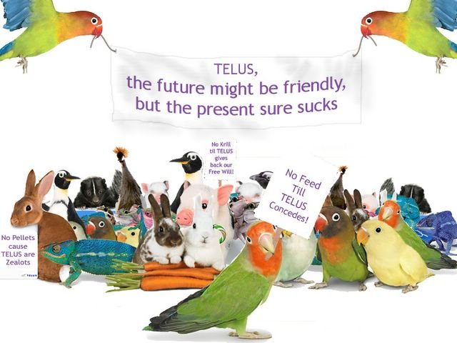 Telus Calendar Wallpaper : Telus animals wallpaper